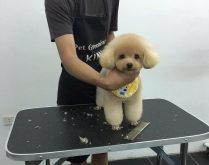 Top 5 Dịch vụ spa cho thú cưng uy tín nhất ở TP.HCM